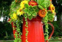 Unusual Planters / by Mara Gandia-Wong