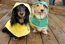 Weenies&Others / Doxies and other cute creatures. / by Megan Atwood