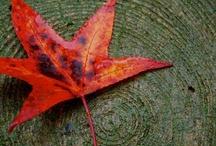 Autumn / by Trish Nonaka