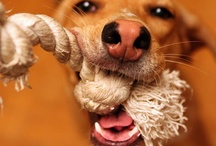 For The Pooch / Stuff to make for the doggy / by Kat White