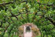 edible garden / by Lone christiansen