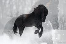 Horses- 2 U Moe / by Anita Codeluppi