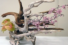 Ikebana and Bonsai / by Nomeda Lukoseviciene
