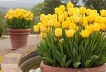 Gardening / My favorite indoor and outdoor gardening inspirations. / by Rachel @ Creative Homemaking