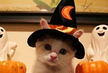 Halloween / by Kat Jones