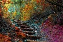 Autumn  / by Kat Jones