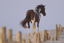 Horses  / by Kat Jones