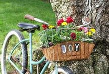 Baskets, Boxes, & Bicycles / by Vera