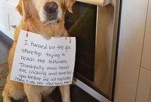Dog shaming & Stuff / by Sarah Garman
