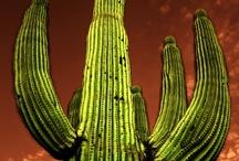 My beloved Arizona / by Lisa Hahn