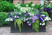 Window Boxes and seasonal containers / by Kathy Jump