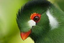 Birding / by Holbrook Travel