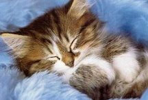 ~Here Kitty Kitty~ / Adorable and precious cats and kittens to warm your heart / by Judy Lehman