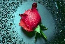 Rose Splendor / As you look @ these photos you can almost SMELL THE ROSES!! / by Judy Lehman