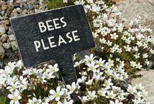 Bee love / by Melissa Sorensen
