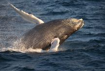 Whales / The most gentle giant you could ever find on Earth!  / by Wildlife Earth