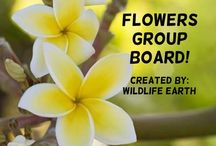 Flowers Group Board / You have found the perfect group board for finding all plants and flowers! To be added please leave a comment on one of MY pins and say ADD ME. -Wildlife Earth / by Wildlife Earth