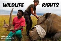 Wildlife Rights / This group board is dedicated to creating awareness about wildlife in danger of extinction, poaching, abuse, etc.  *Warning, some pictures are graphic!* / by Wildlife Earth