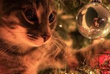 Country Christmas  / by Susan Swaim