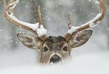 Dear deer. / An eye * Then an ear * I think I see a dear * Hiding behind that big tree * A stomp * Then a flash * And he's gone in a flash * I think the deer just saw me  / by Arlette Ferber