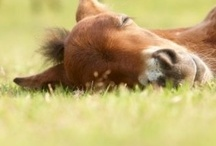 For the love of horses / by Liz Leeck