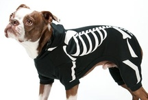 Halloween! / Dog costumes for your pets from Drs. Foster and Smith. Offering some classics, any dog can look cute dressed up this halloween. We also offer a how to video for getting your dog to wear a costume! / by Drs. Foster and Smith