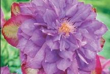 Purple royale / by Ingeborg van Zuiden