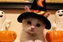 Halloween / by Laura DiNapoli-Esteves