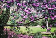 Cornwall Spring Gardens / by I love Cornwall