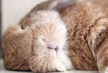 Cute Buns / by Evelyn Wentworth-Stanley