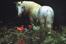 Fairytales / Always  believe  in fairytales and let your imagination wander / by Karen Marie