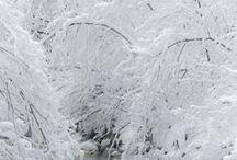 Seasons: Winter Snows / by Larissa Waiz