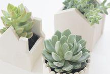 Succulent love / by Semra Bayrak