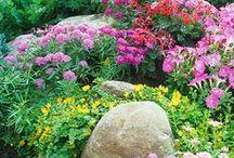 LandScape & Gardens / by MHD KR