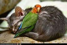 Birdie Sweetness / by Freebird Collective