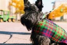 Scotland the Brave / by Joanna Clyne