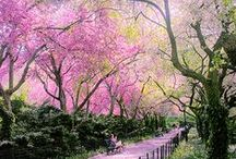 *{NYC} Nature / by eyelike designs
