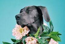 animals / by Marta Ibarrondo