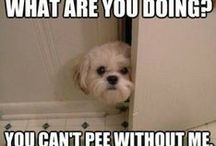 Funny Animals Pics / Some of the funniest animal pictures and witty captions. / by Pet Sitters Ireland