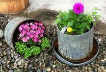 Gardening / by Wendy Santiago