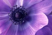 Purple / All things purple / by Roni Culver