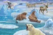 Sarkvidék / Arctic / by Jolán Szabó