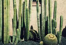 Cactus / by carolina scott