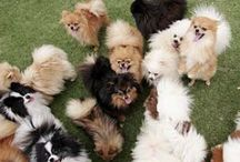 Poms / by ZoeDoggy of Beverly Hills