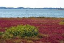 Lower Shore Landscapes / by The Delmarva Daily Times