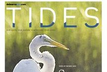 Tides / The Daily Times Tides section on Sundays explores the intersection of life and water on the Delmarva Peninsula.  / by The Delmarva Daily Times