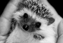 Adorable animals / by Clarissa Brandley