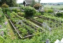 Yard & Garden / by Joyceln Busch