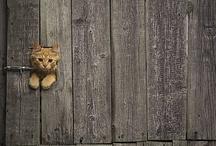 Sweet Animals / by Mayra van Hooydonk