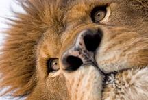 Wild Animals / by Mayra van Hooydonk
